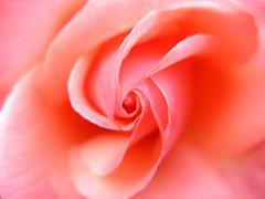 pink sunday