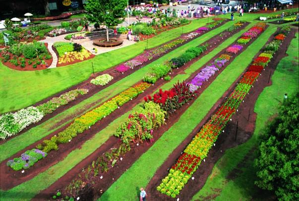 South Carolina Festival of Flowers
