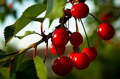 "<"" alt=""cherries"" />"