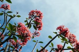 "<img src=""image.gif"" alt=""Pink Flowers"" />"