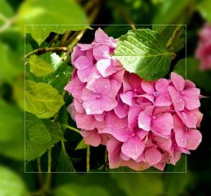 "<img src=""pink flower"" alt="" "" />"