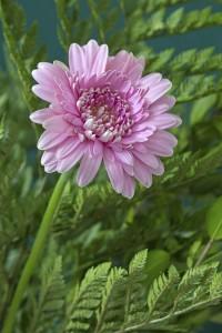 "<alt=""pink flower""/>"