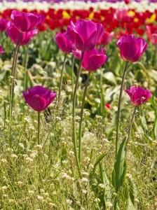 """<alt=""""Pink Flowers in a Field""""/>"""
