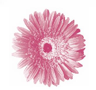 logo pink flower
